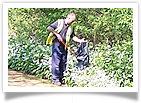 Litter Picking Image