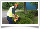 Shrub Maintenance Image